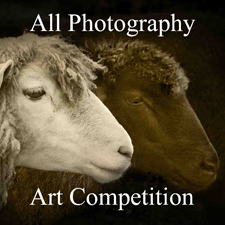 All Photography - Art Competition