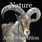 Nature - Online Art Competition 2015