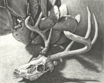 Crystal Orlando - Deer Skull